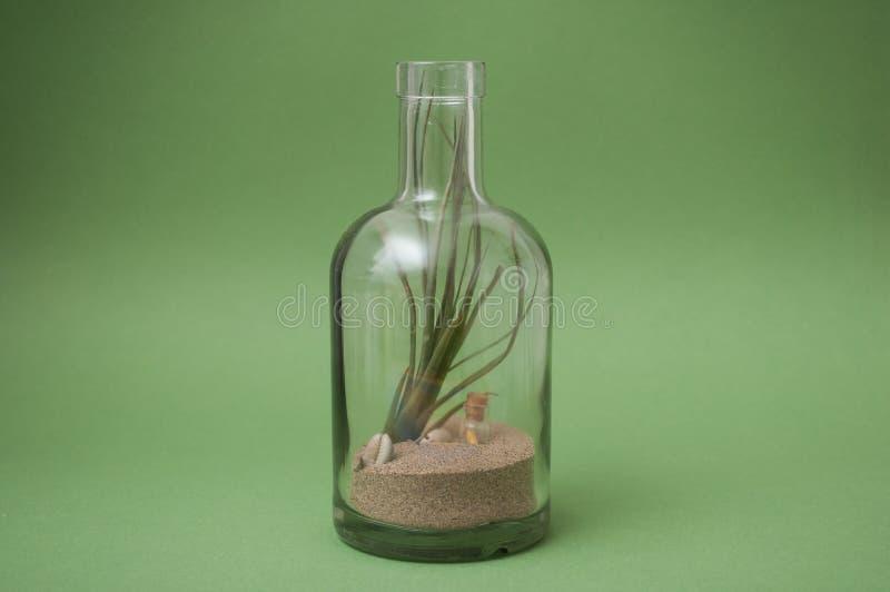 微型风景的空中植物在绿色背景的一个透明瓶 库存图片