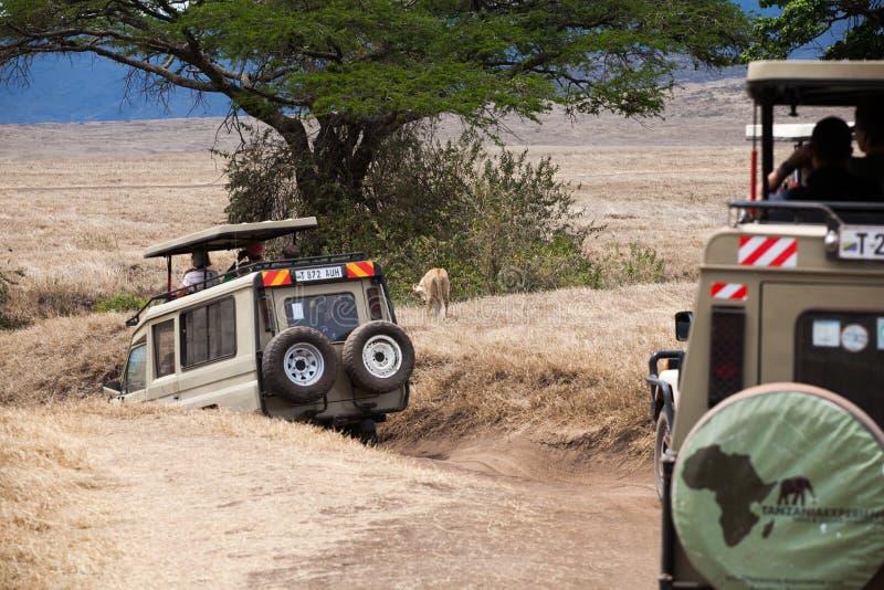 徒步旅行队汽车的游人观看一只雌狮 库存图片