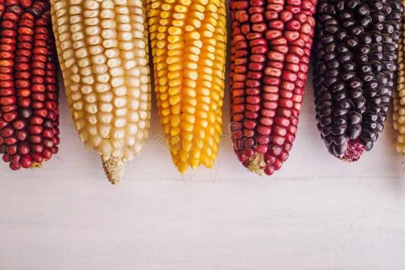 在不同颜色的墨西哥玉米庄稼在墨西哥 库存图片