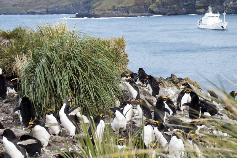 在丛草中的通心面企鹅与在海湾的船在背景中 免版税库存图片