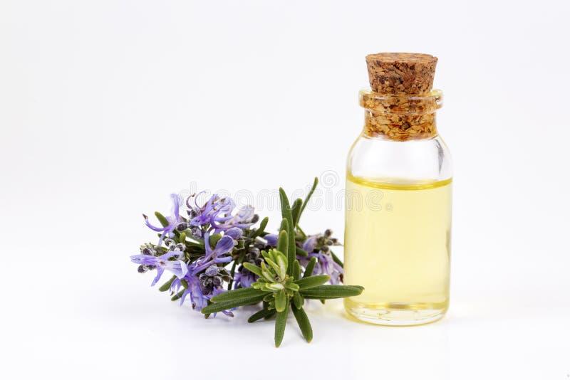 在一个小瓶的罗斯玛丽精油 自然芳香化妆油 免版税库存照片
