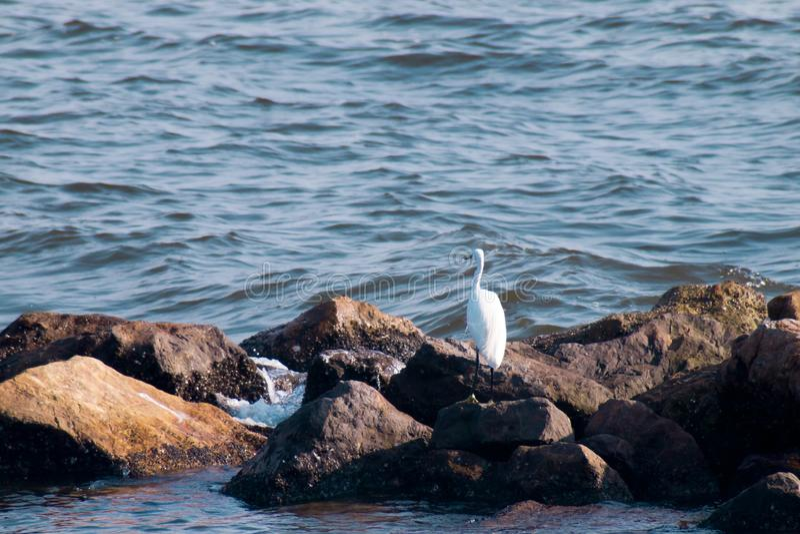 在一个岩石的海鸥由海观看入海的 自然 背景上色节假日红色黄色 免版税库存照片