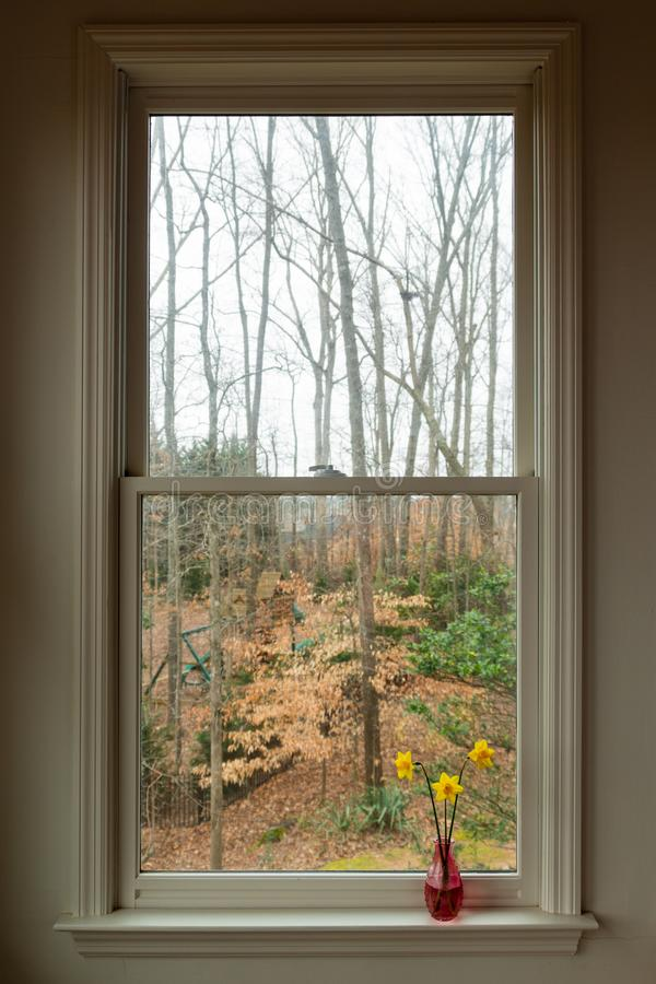 在一个桃红色花瓶的黄色黄水仙发亮的一个灰色冬日在窗口里 库存照片