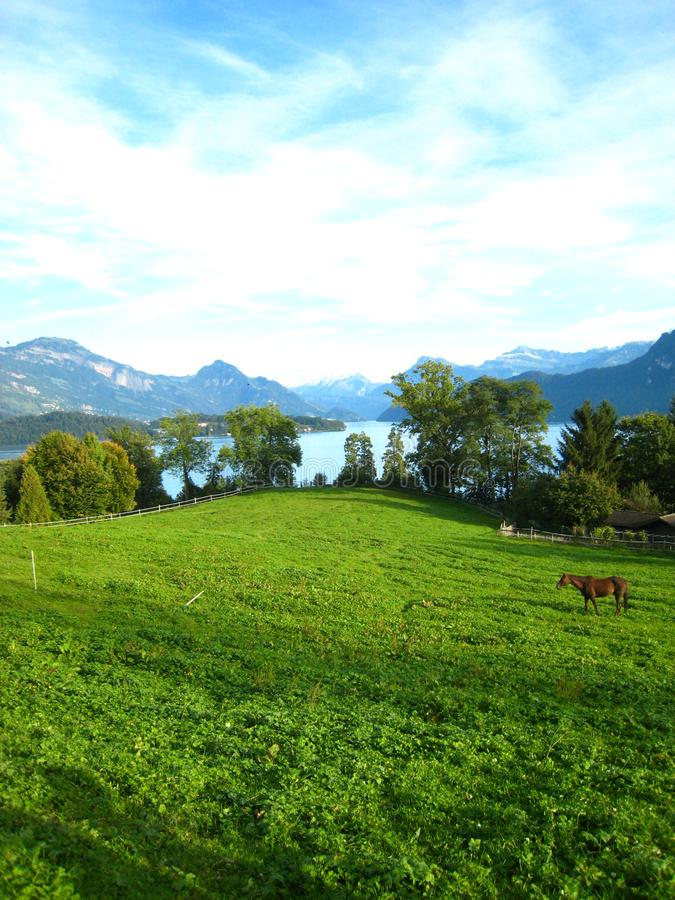在一个绿松石瑞士湖的美丽的景色有积雪的山、游艇、风船和一匹马的在美丽 库存照片