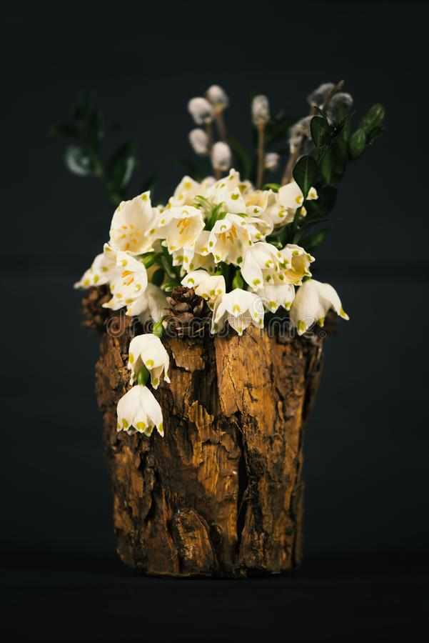 在一个装饰花瓶的Leucojum vernum 是第一春天雪花 内部的装饰 免版税库存图片