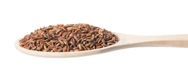 在一把木匙子的糙米在白色背景 图库摄影
