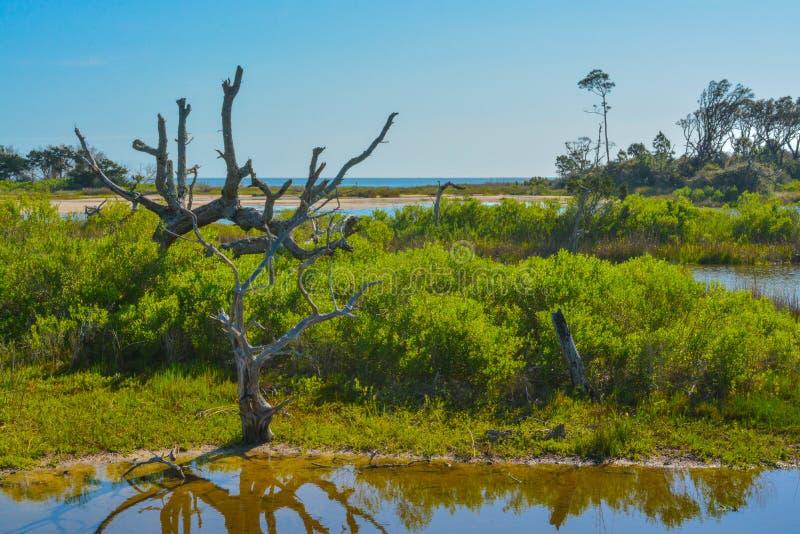 在大塔波特国家公园,杰克逊维尔,杜瓦尔县,佛罗里达美国的库玛及其周围小河 免版税库存照片