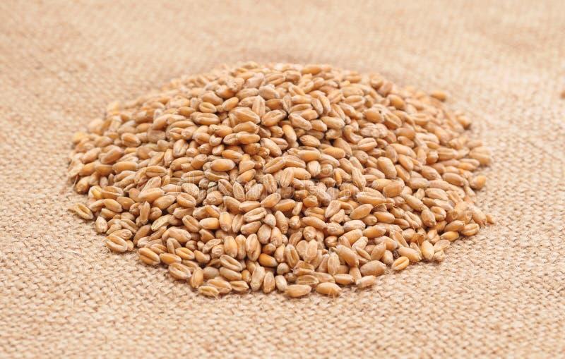 在大袋的麦子 免版税库存图片