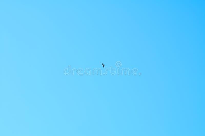 在天空蔚蓝的鹳飞行 免版税图库摄影