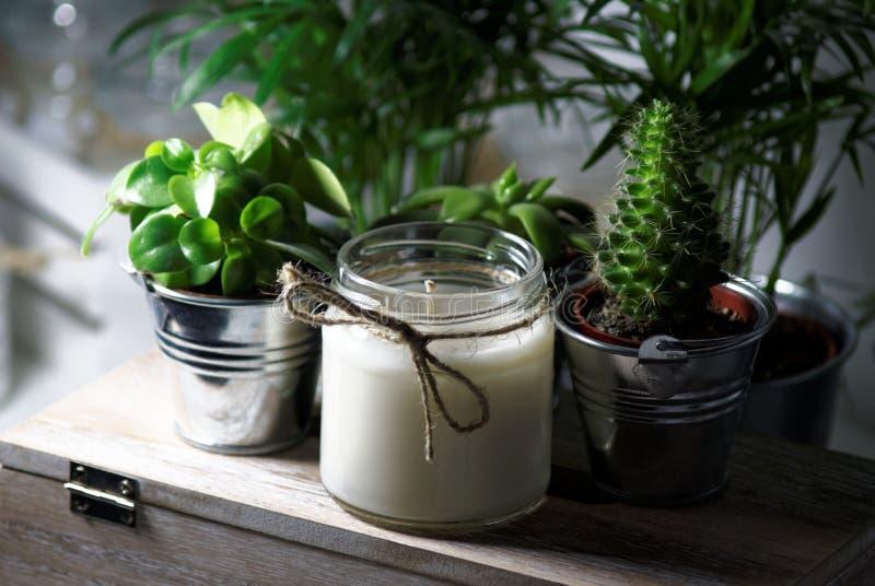 在多汁植物之间的蜡烛 库存照片