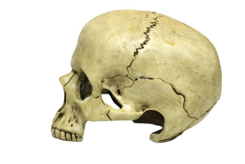 在外形的人的头骨 免版税库存照片