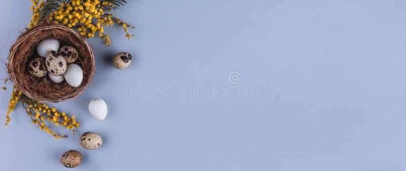 在巢和春天花的复活节彩蛋在假日背景 与拷贝空间的顶视图 看板卡愉快的复活节 免版税库存照片