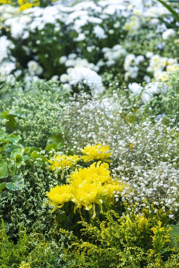 在庭院花的五颜六色的花床 免版税库存图片