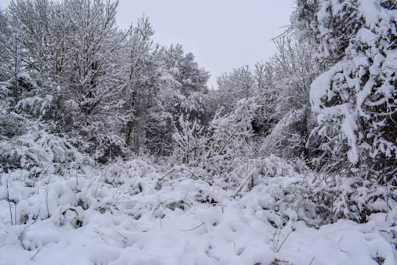 在圣诞节季节/冬天期间,斯诺伊森林在法国乡下 免版税库存图片