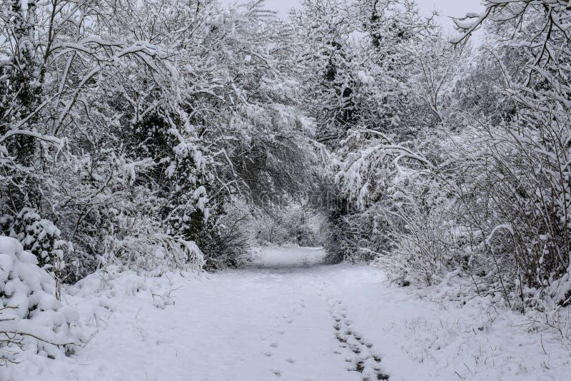 在圣诞节季节/冬天期间,斯诺伊森林足迹在法国乡下 免版税库存图片