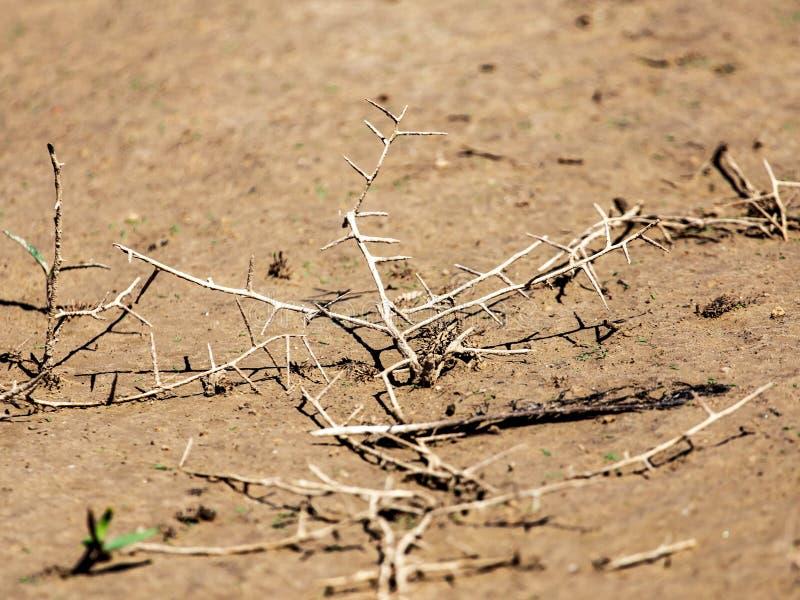 在地面上的干燥棘手的植物作为背景 免版税库存图片