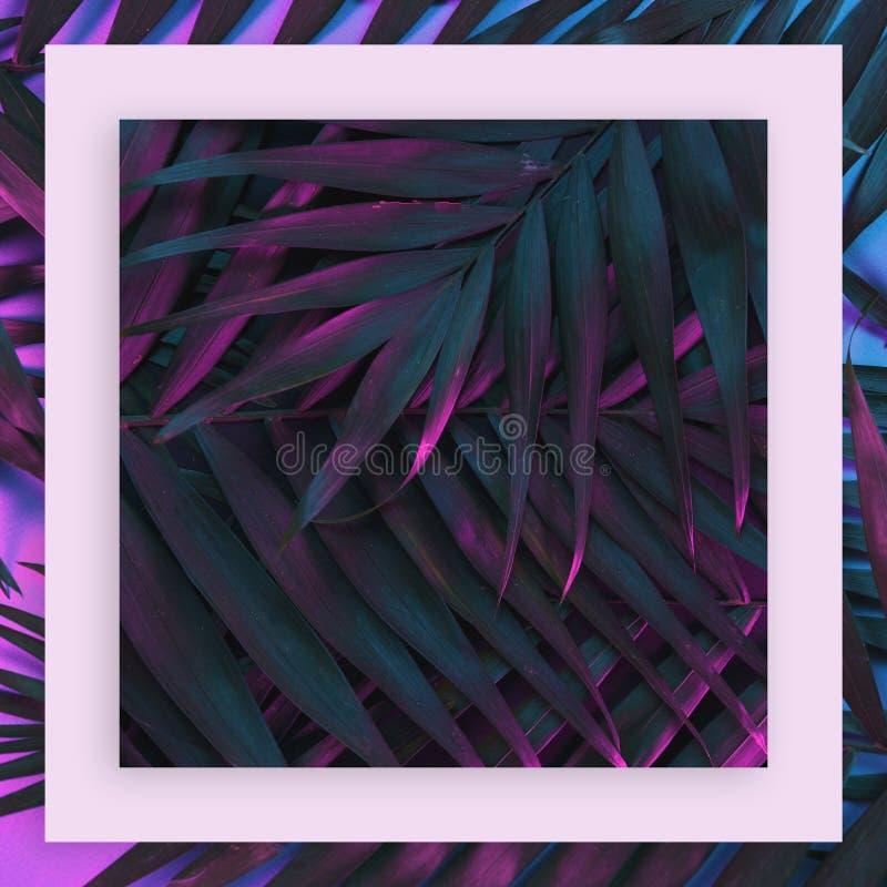 在充满活力的大胆的梯度全息照相的霓虹颜色的热带和棕榈叶 免版税图库摄影