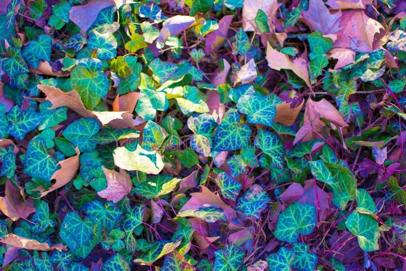 在充满活力的超现实的大胆的全息照相的颜色的森林叶子 概念艺术 超现实主义背景 图库摄影