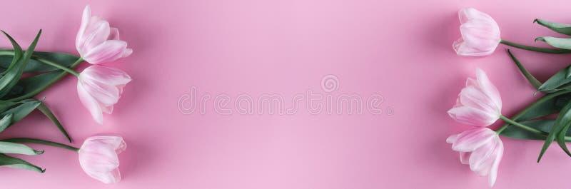在桃红色背景的桃红色郁金香花 卡片为母亲节,复活节快乐3月8日, 等待的春天 2007个看板卡招呼的新年好 库存照片