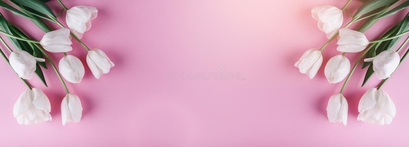 在桃红色背景的白色郁金香花 卡片为母亲节,复活节快乐3月8日, 等待的春天 2007个看板卡招呼的新年好 库存照片