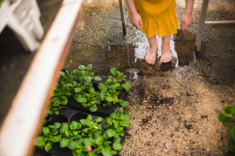 在水坑的女孩的赤脚 库存照片