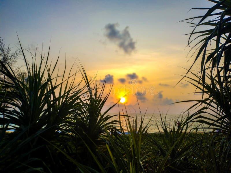 在海和杉木的日落 库存图片