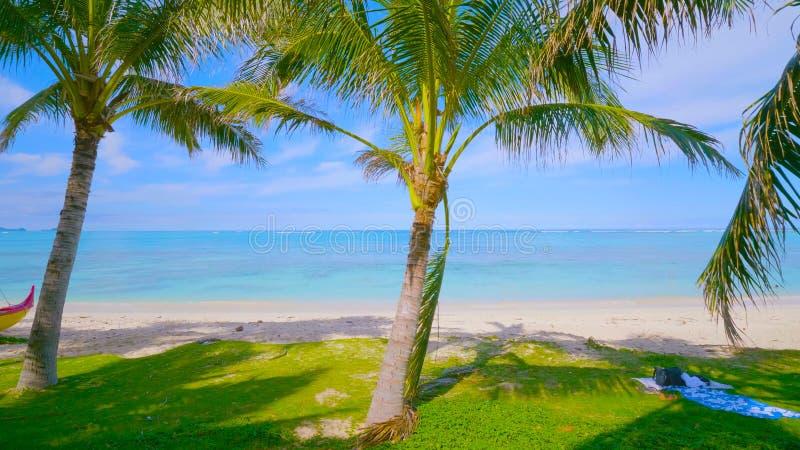 在海滩的棕榈树  美丽的海滩 好的热带海滩看法与棕榈的 海岸线,风景 在夏威夷2019年 免版税库存照片