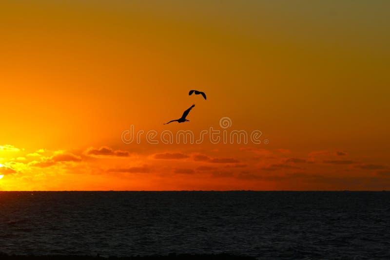 在海的落日在一个热带海岛,斐济 免版税图库摄影