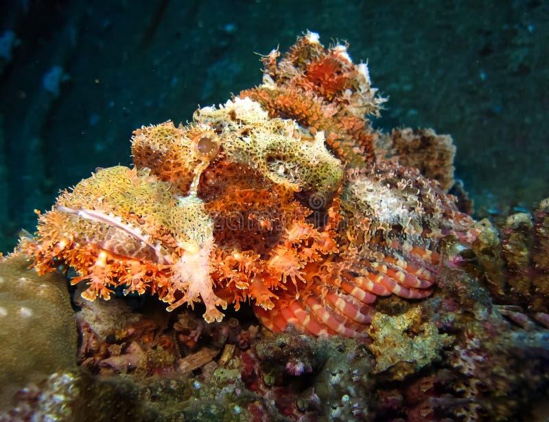在深水的水下的世界在珊瑚礁和植物在蓝色世界海洋野生生物、鱼、珊瑚和海生物的花植物群 免版税库存图片