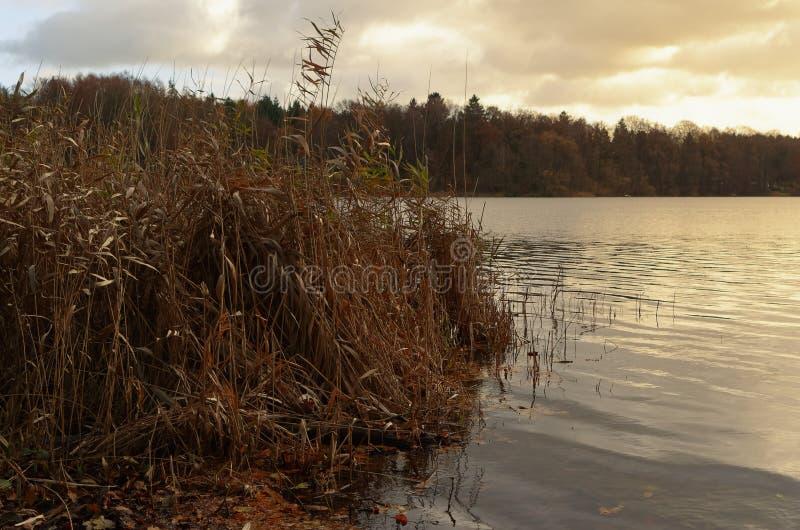 在湖的日落有在前景的芦苇的 免版税库存图片