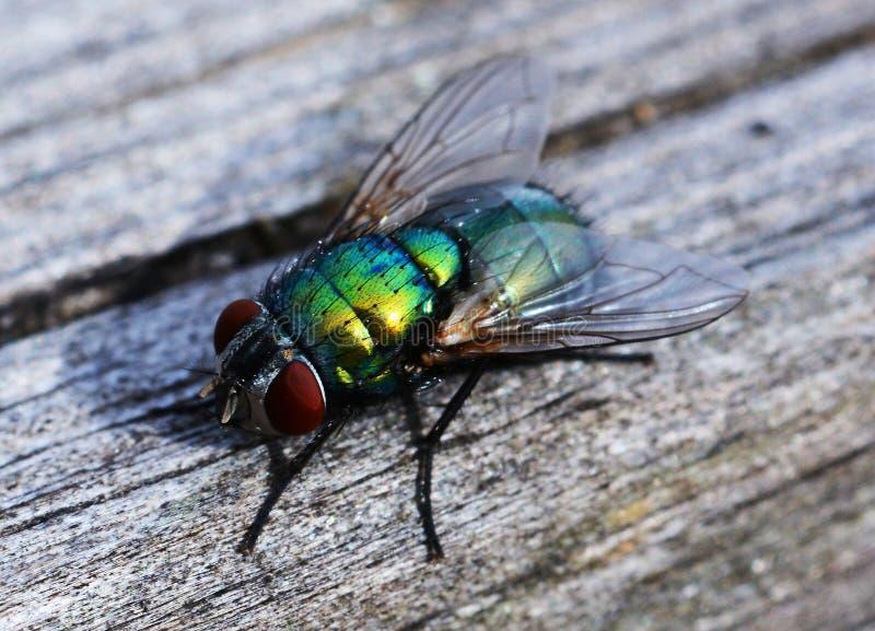 在木头的绿色飞行 图库摄影