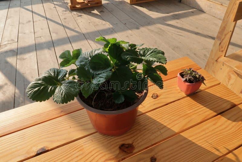 在架子阳台的小花盆有不可思议的在早晨第4部分的太阳光 图库摄影