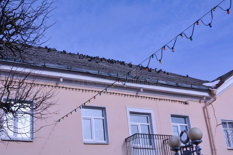 在房子的屋顶的鸽子有桃红色墙壁的 图库摄影