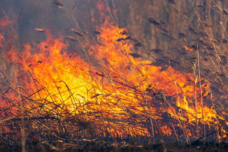 在春天,消防队员与森林火灾战斗 他们设法熄灭一场森林火灾自白天 免版税库存图片