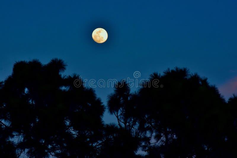 在日落之前的月亮 免版税库存照片
