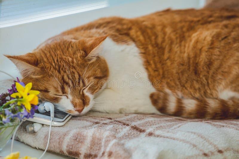 在手机和耳机的睡觉红白的猫 免版税库存图片