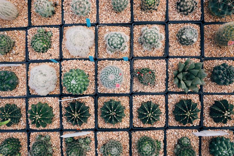 在方形的形状的罐,在罐投入了许多仙人掌植物 库存图片