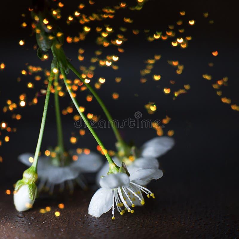 在方形的黑背景的樱桃花与聚焦和bokeh 免版税图库摄影