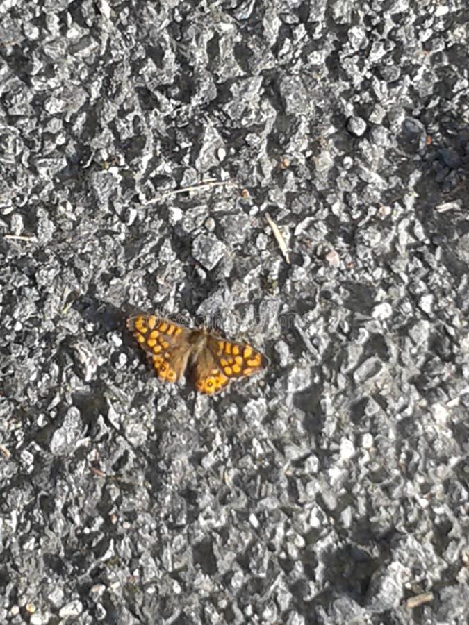 在灰色地面都市野生生物的黄色蝴蝶 库存例证