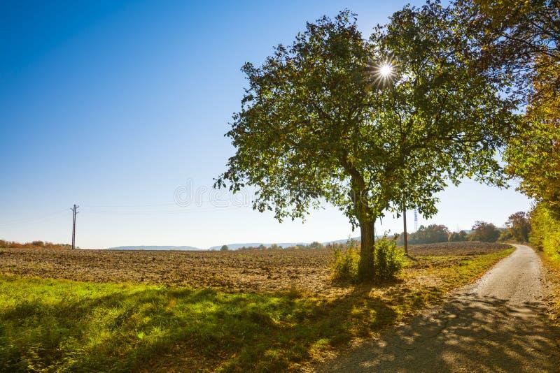 在称Romantic的路线的秋天场面Road,德国 免版税库存图片
