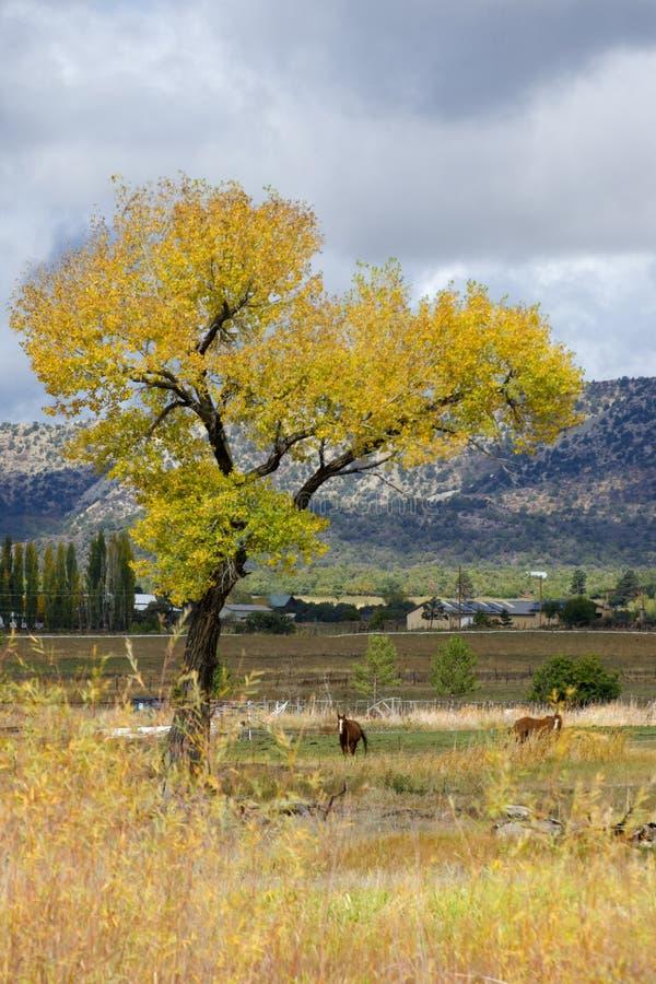 在秋季的马 免版税库存图片