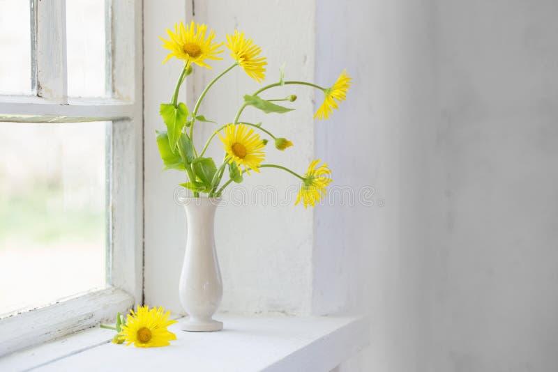 在窗台的黄色春黄菊 免版税图库摄影