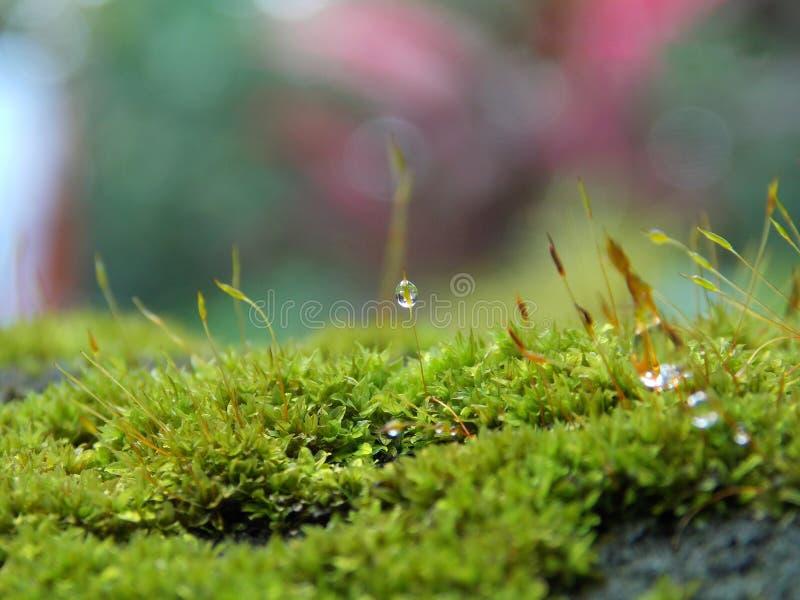 在绿草的水滴 免版税图库摄影
