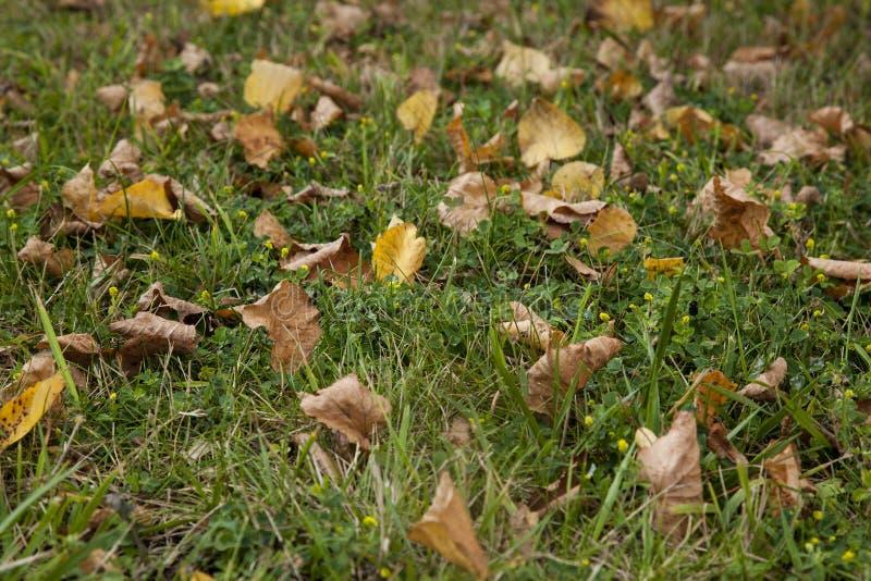 在绿草领域的秋天叶子 免版税库存照片