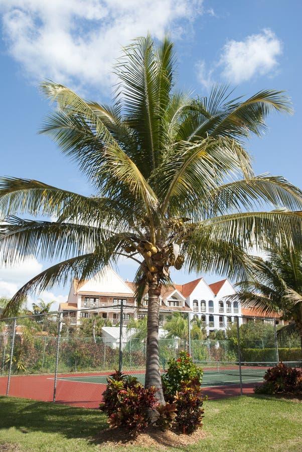 在网球场旁边的棕榈树 免版税库存图片