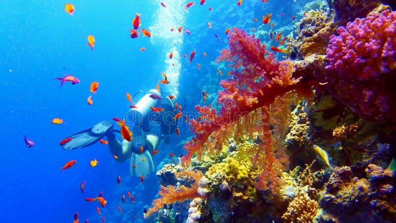 在美丽的珊瑚礁附近的轻潜水员 免版税库存图片