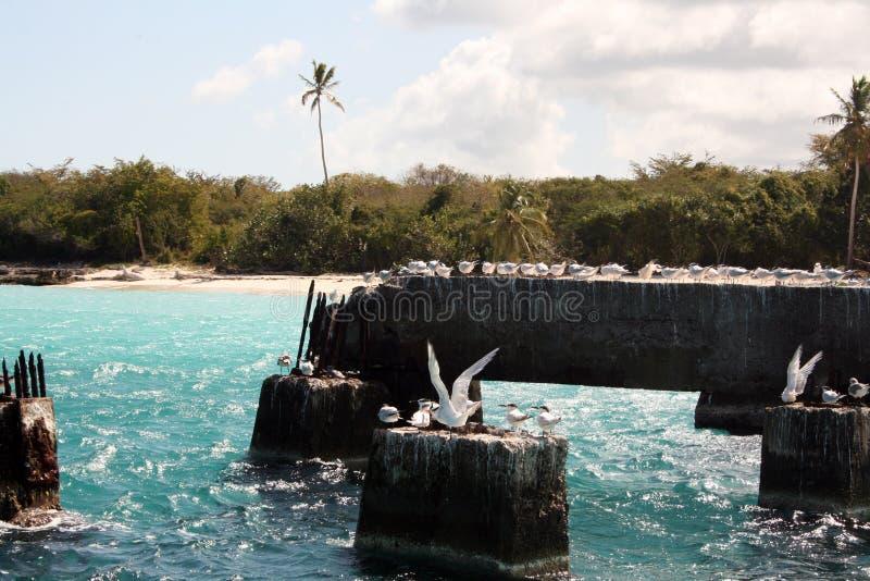 在石头的海鸥在海在一好日子 免版税库存图片