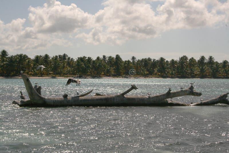 在石头的海鸥在海在一好日子 库存图片