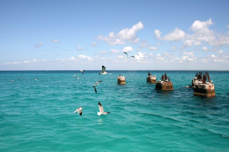 在石头的海鸥在海在一好日子 免版税图库摄影