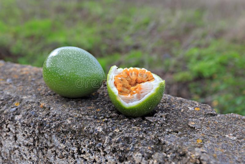在石篱芭的激情果子在农夫后院,特内里费岛,西班牙 免版税库存图片